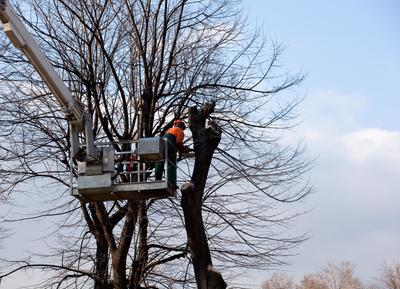 Tree Removal Pickering