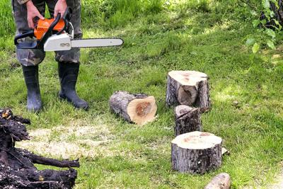Tree Cutting Pickering ON