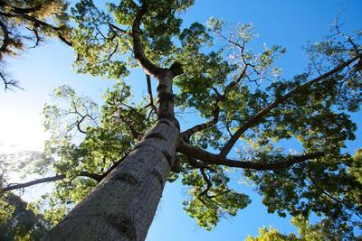 Tree Maintenance Service Pickering ON